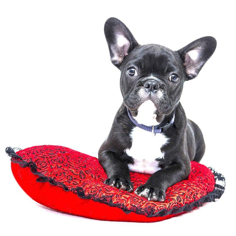 Bienvenido a marina dog tenerife 4