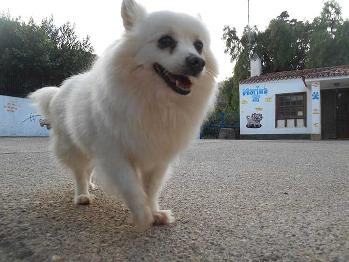marina dog tenerife galeria (1)