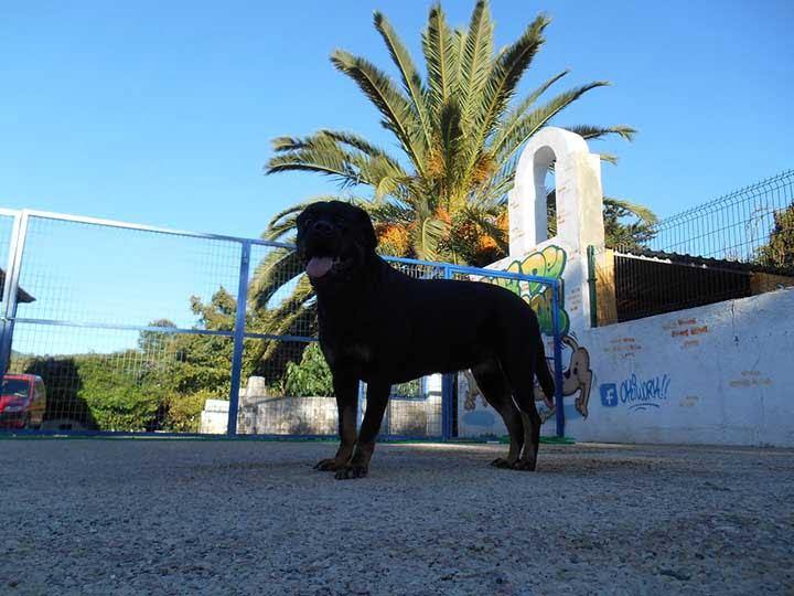 marina dog tenerife galeria (13)