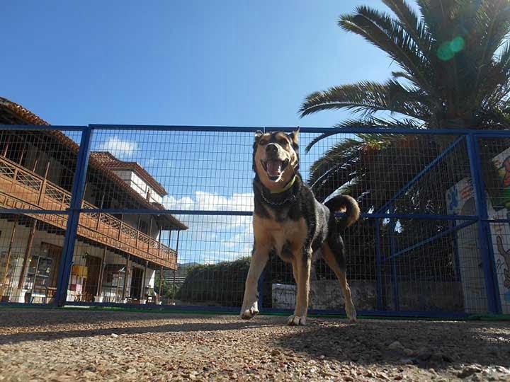 marina dog tenerife galeria (18)