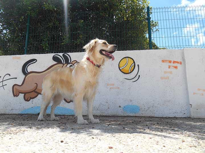 marina dog tenerife galeria (23)