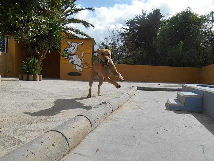 marina dog tenerife galeria (24)