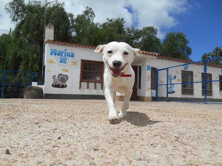 marina dog tenerife galeria (27)