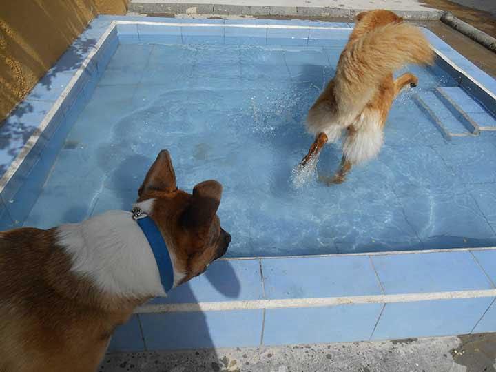 marina dog tenerife galeria (3)