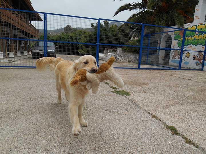 marina dog tenerife galeria (7)
