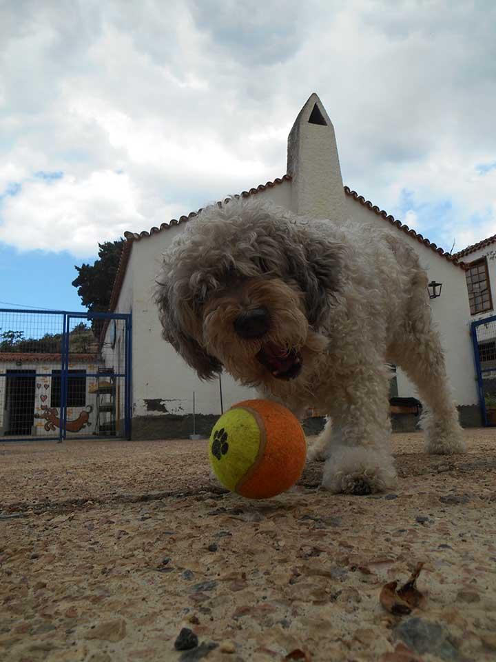 marina dog tenerife galeria (8)