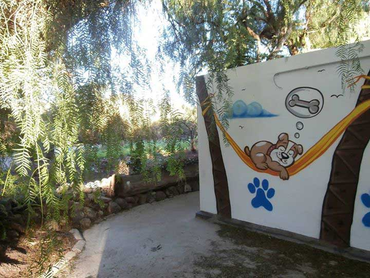 marina dog tenerife instalaciones galeria (1)