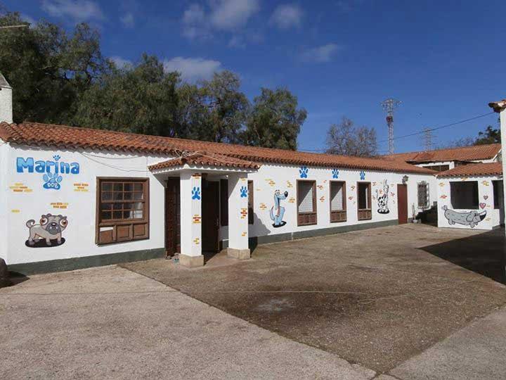 marina dog tenerife instalaciones galeria (10)