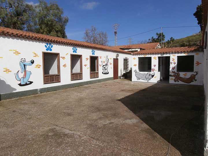 marina dog tenerife instalaciones galeria (11)