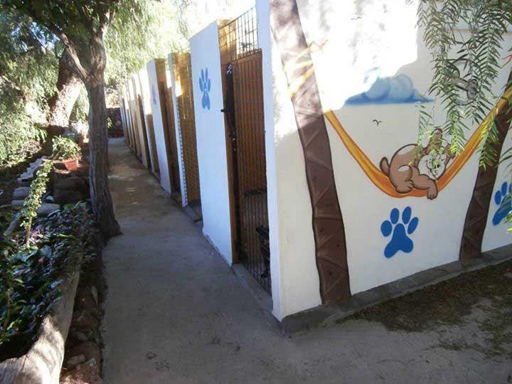 marina dog tenerife instalaciones galeria (2)