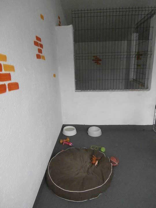marina dog tenerife instalaciones galeria (6)