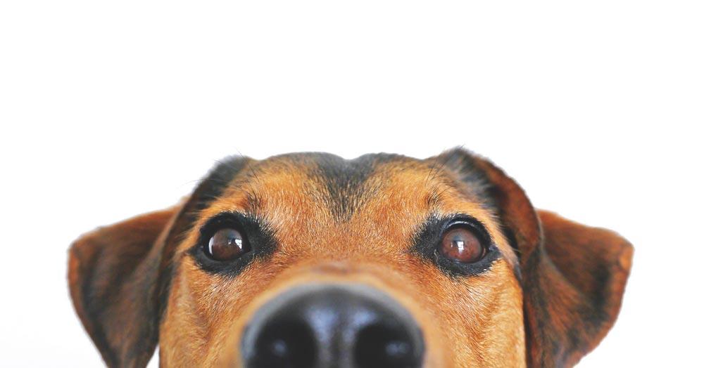 reservas marina dog tenerife
