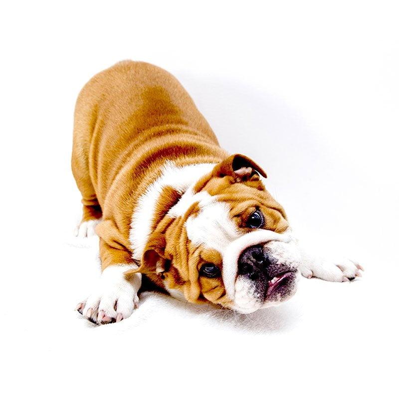 servicios marina dog 1